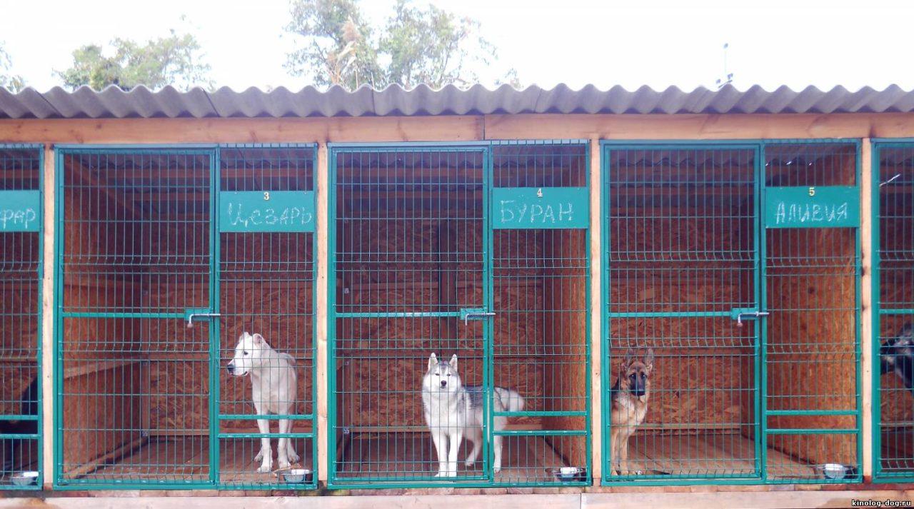 Открыть гостиницу для собак — преимущества