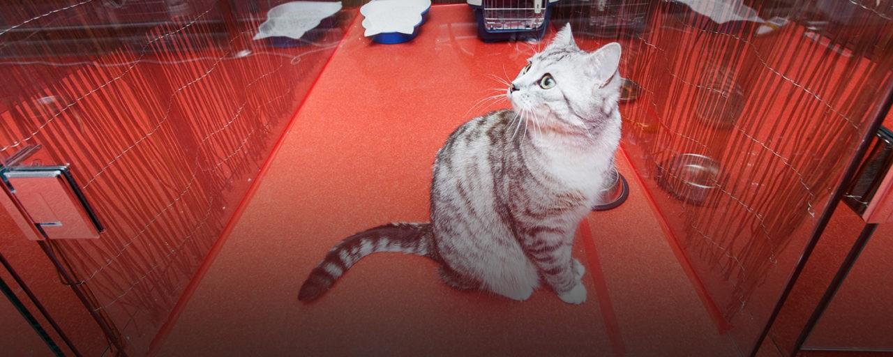 Бизнес — гостиница для кошек — советы и хитрости