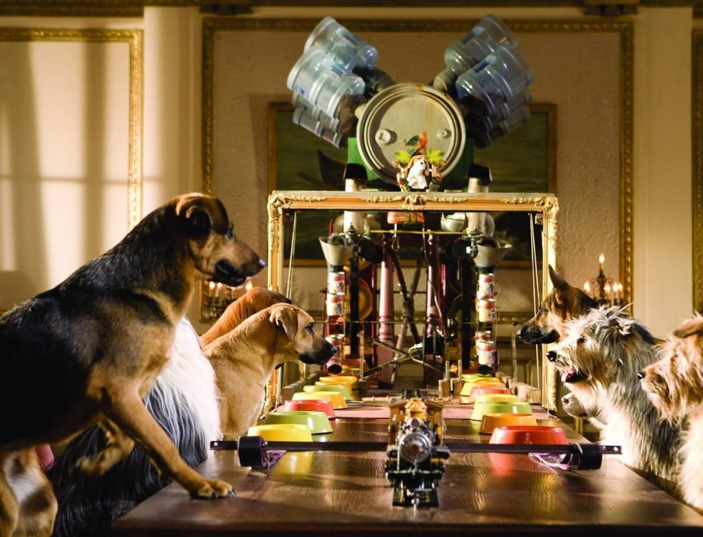 Бизнес-план гостиницы для животных — с чего начать
