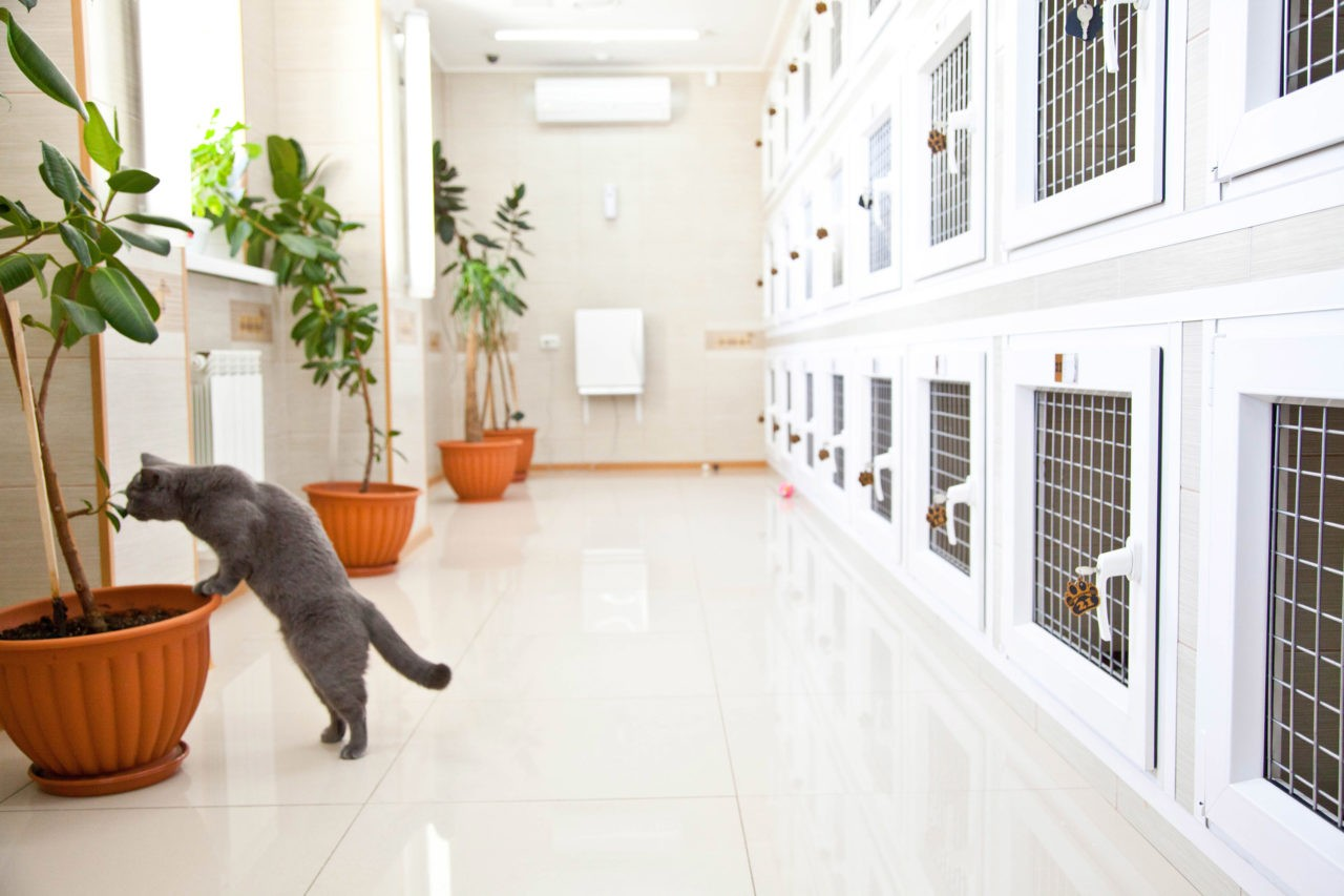 Рекомендации по открытию бизнеса: гостиница для животных