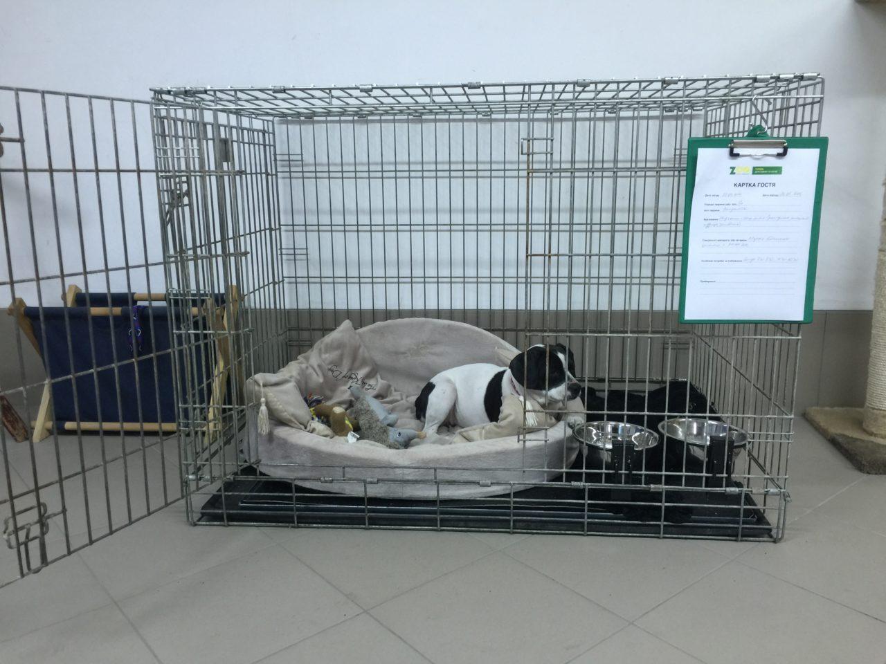 Бизнес на гостинице для животных — помещение