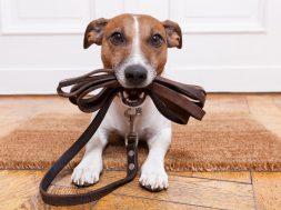 Как открыть гостиницу для собак
