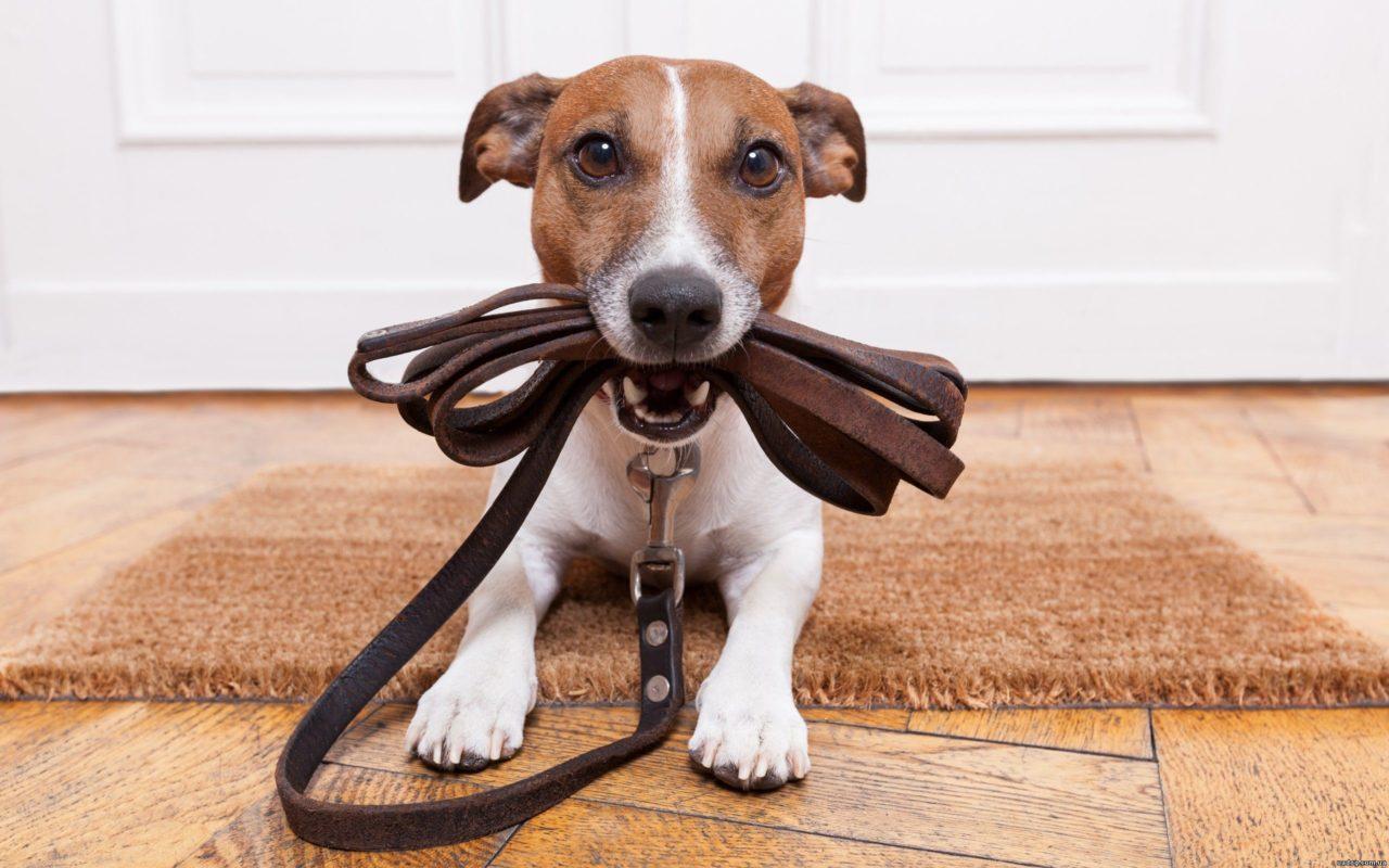 Как открыть гостиницу для собак?
