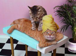 Как открыть гостиницу для кошек