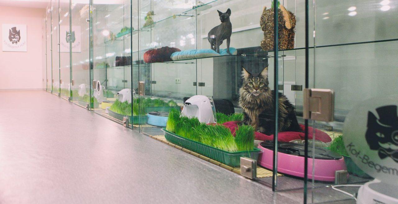 Окупаемость в бизнес-плане гостиницы для животных