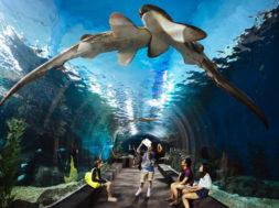Жизнь в океане или знаменитый океанариум в Бангкоке